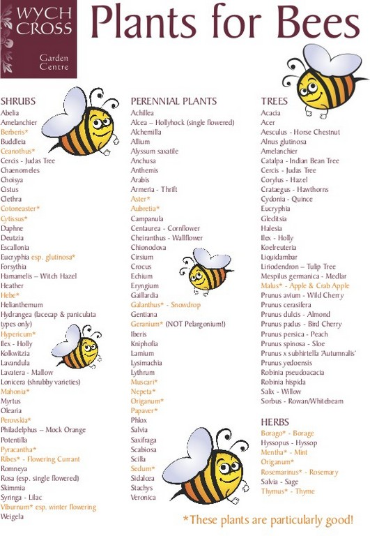 plant for bee